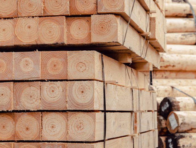Timber - Teaser Image